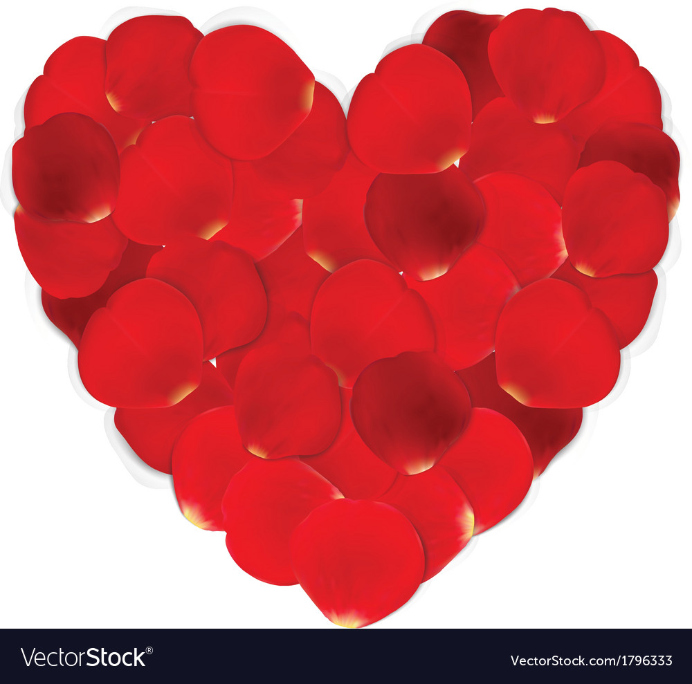 Heart of red petals and blank white paper vector   Price: 1 Credit (USD $1)