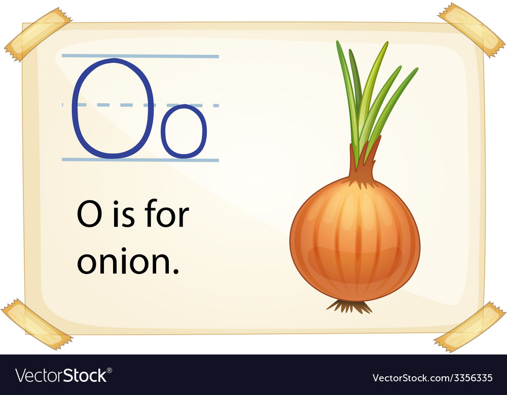 A letter o for onion vector | Price: 3 Credit (USD $3)