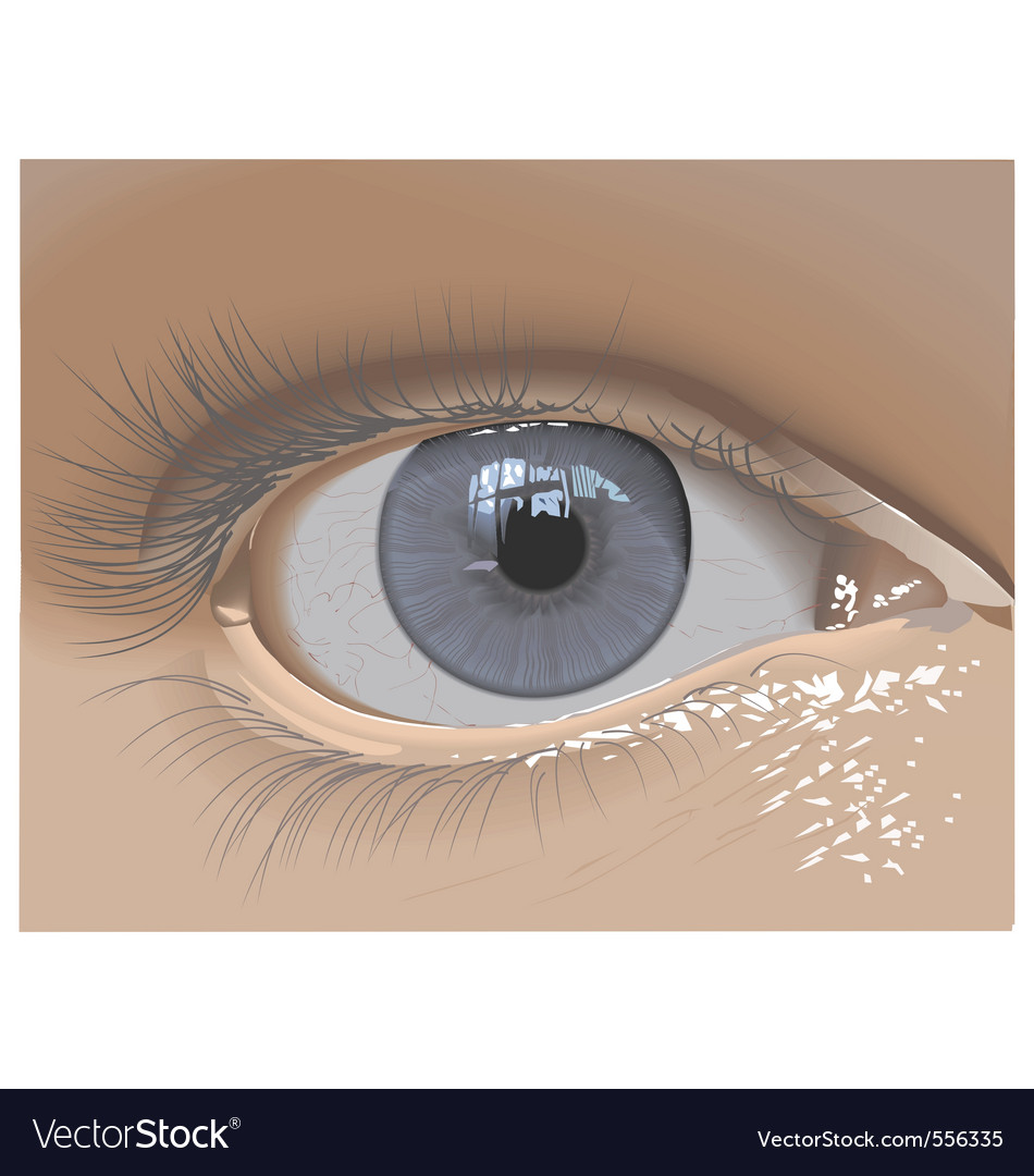 Eye vector | Price: 3 Credit (USD $3)