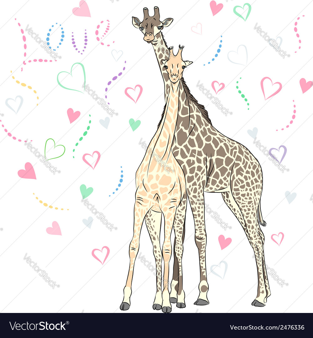 Funny couple in love giraffes vector | Price: 1 Credit (USD $1)