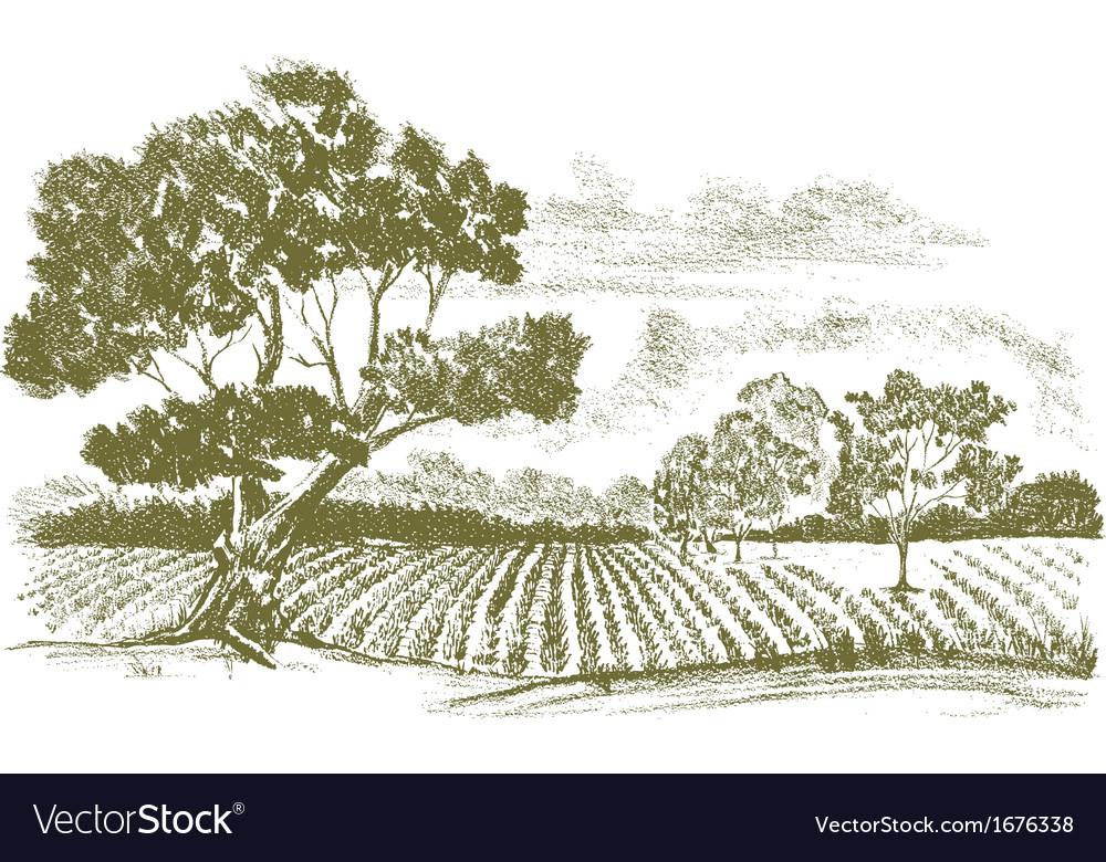 Farmfielddrawing vector | Price: 1 Credit (USD $1)