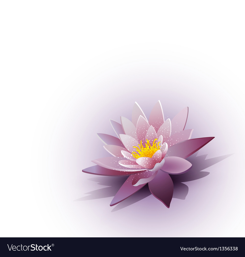 Water lily on the white background vector | Price: 1 Credit (USD $1)