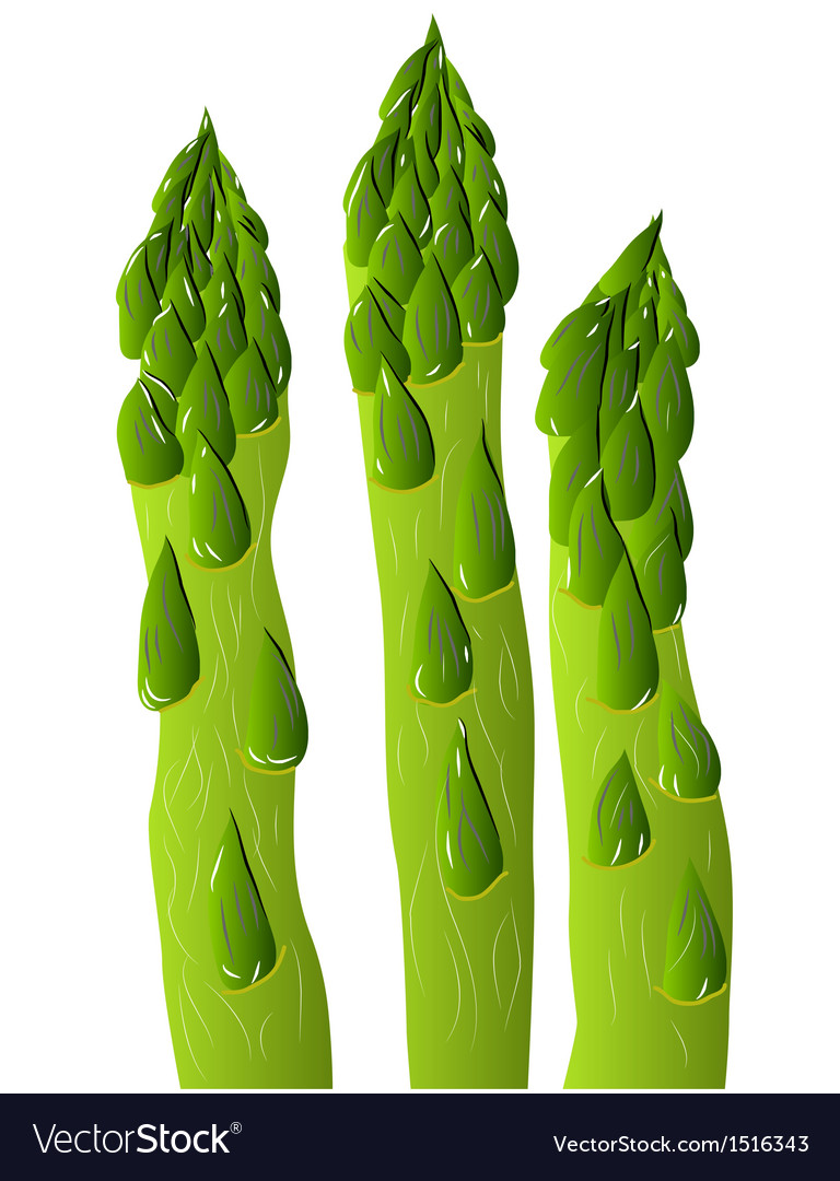 Green asparagus vector | Price: 1 Credit (USD $1)