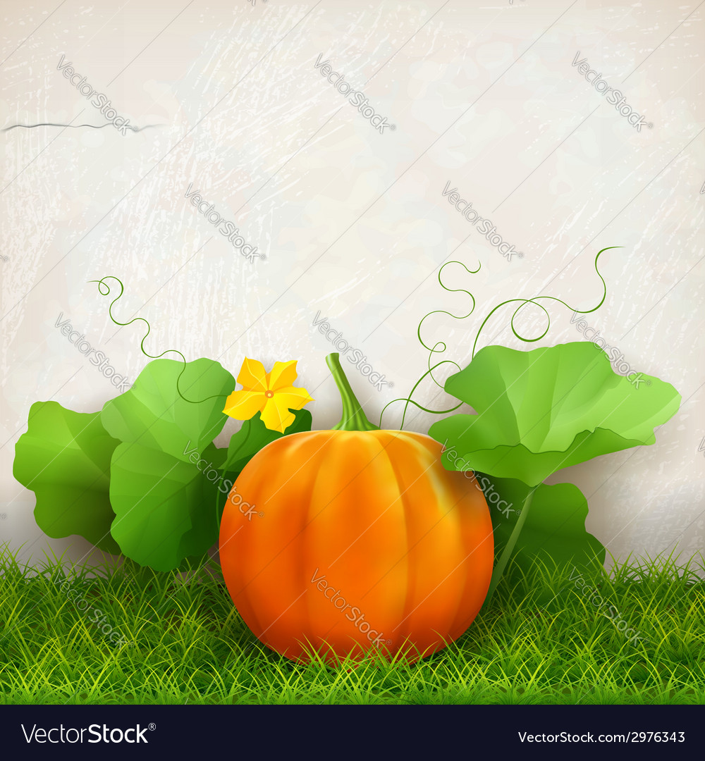Pumpkin leaves grass vector | Price: 3 Credit (USD $3)