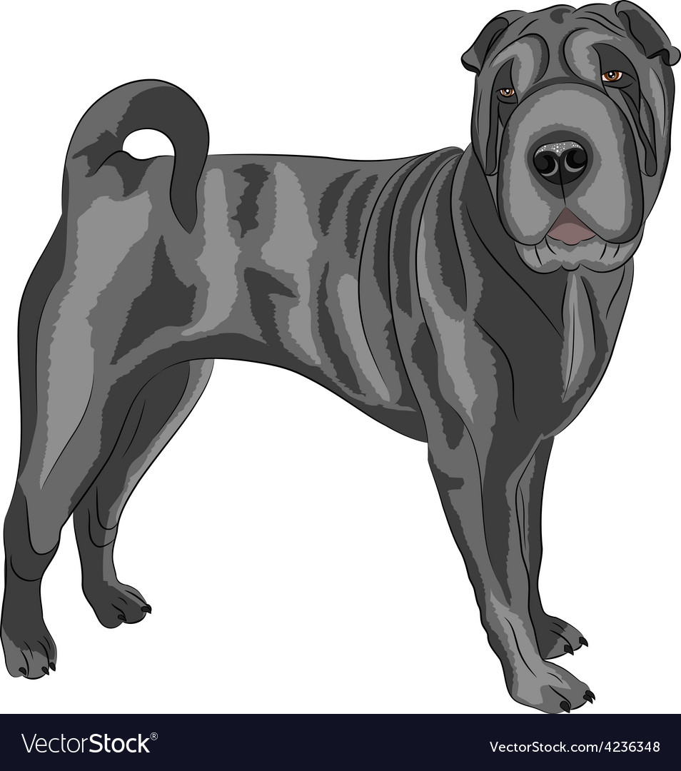 Sharpei vector | Price: 1 Credit (USD $1)