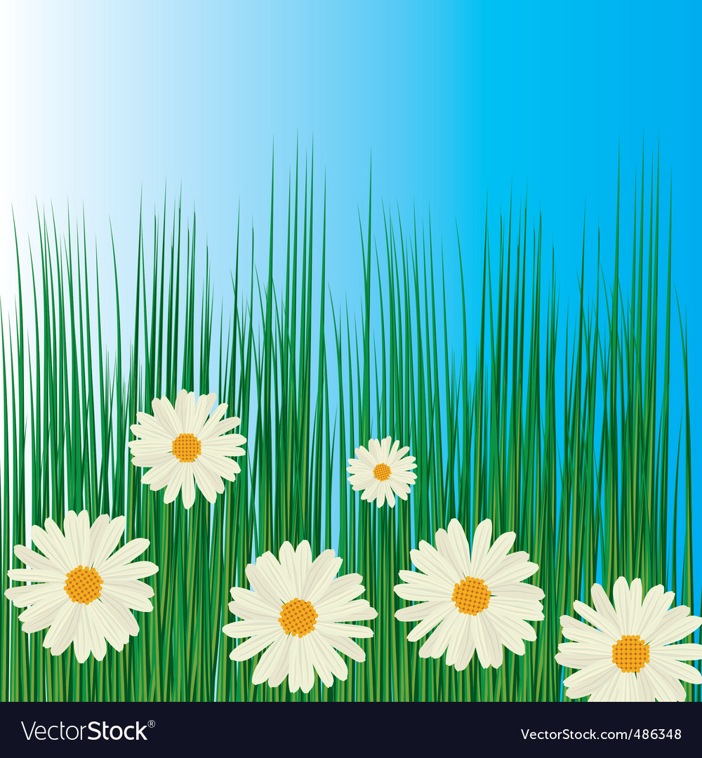 White chamomiles in green grass vector | Price: 1 Credit (USD $1)