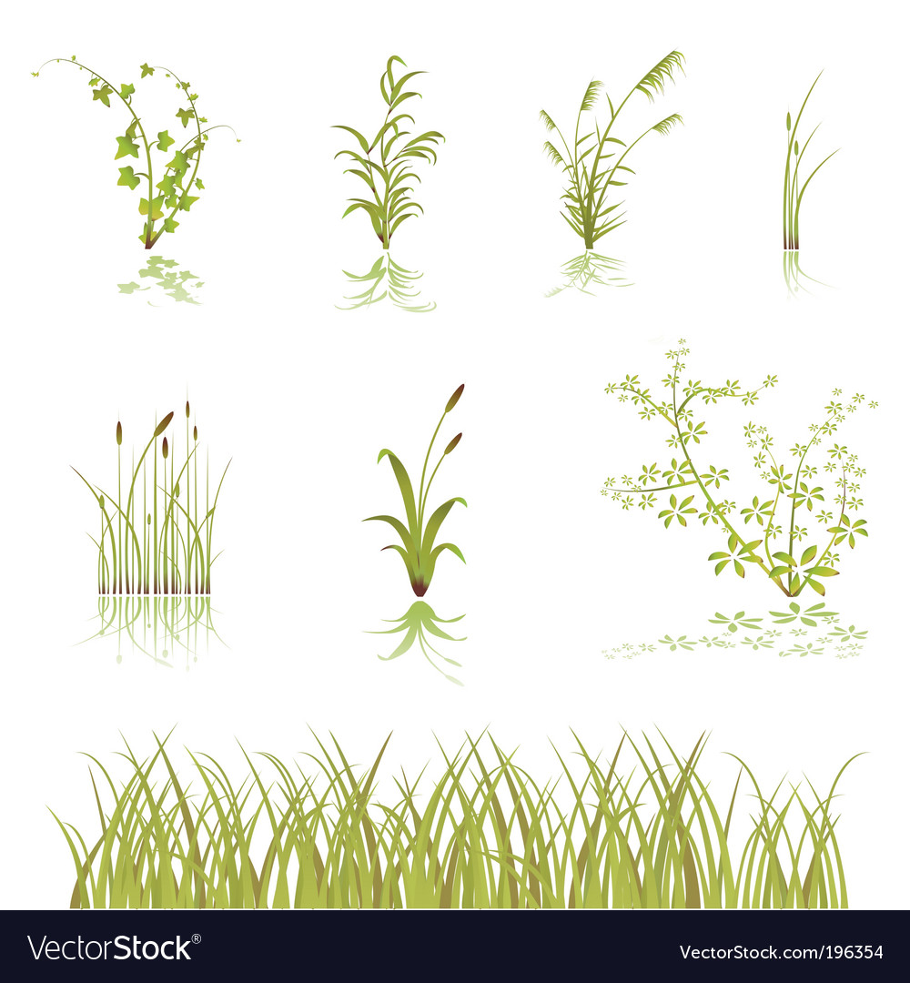 Flower and bushes vector | Price: 1 Credit (USD $1)
