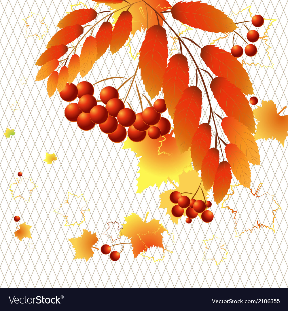 Autumn berries vector | Price: 1 Credit (USD $1)