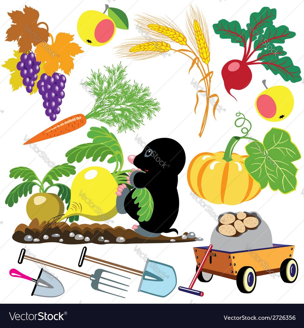 Set autumnal harvest vector | Price: 1 Credit (USD $1)