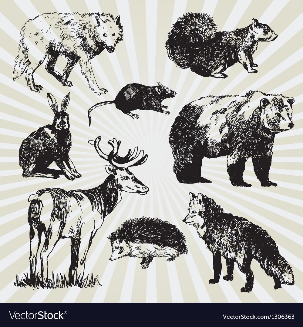 Wild animals vector | Price: 1 Credit (USD $1)