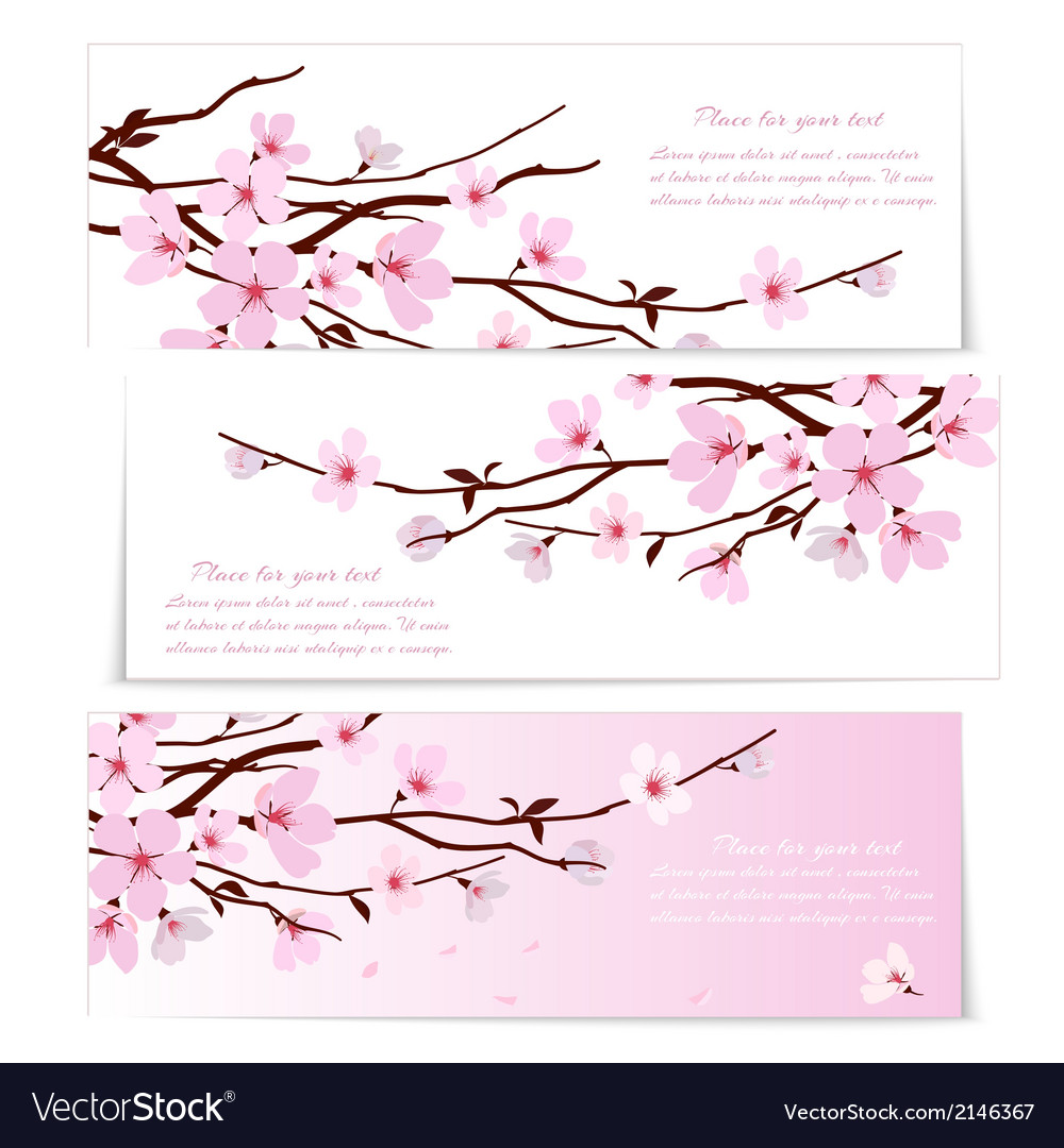 Three banners with sakura flowers vector | Price: 1 Credit (USD $1)