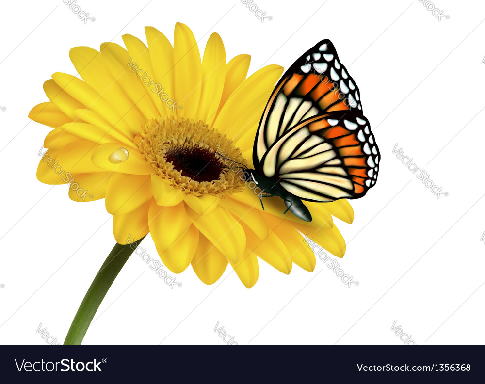 Nature summer yellow flower with butterfly vector | Price: 3 Credit (USD $3)
