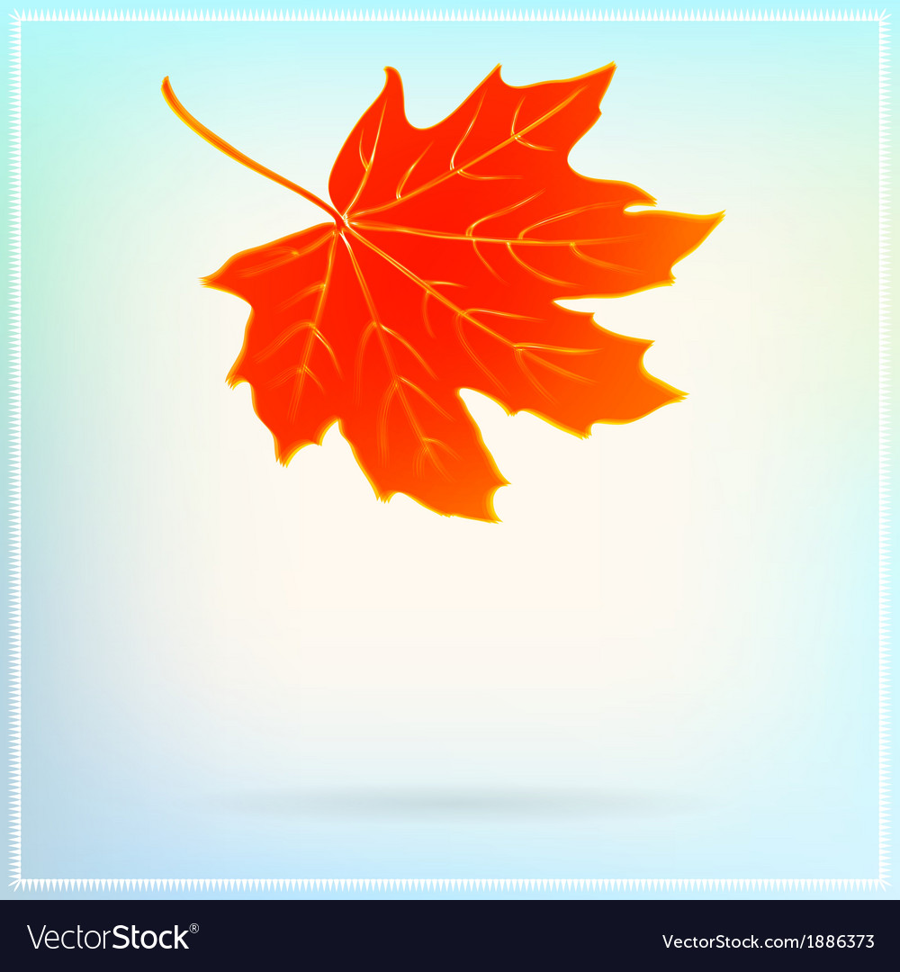 Falling maple leaf on abstract white background vector | Price: 1 Credit (USD $1)