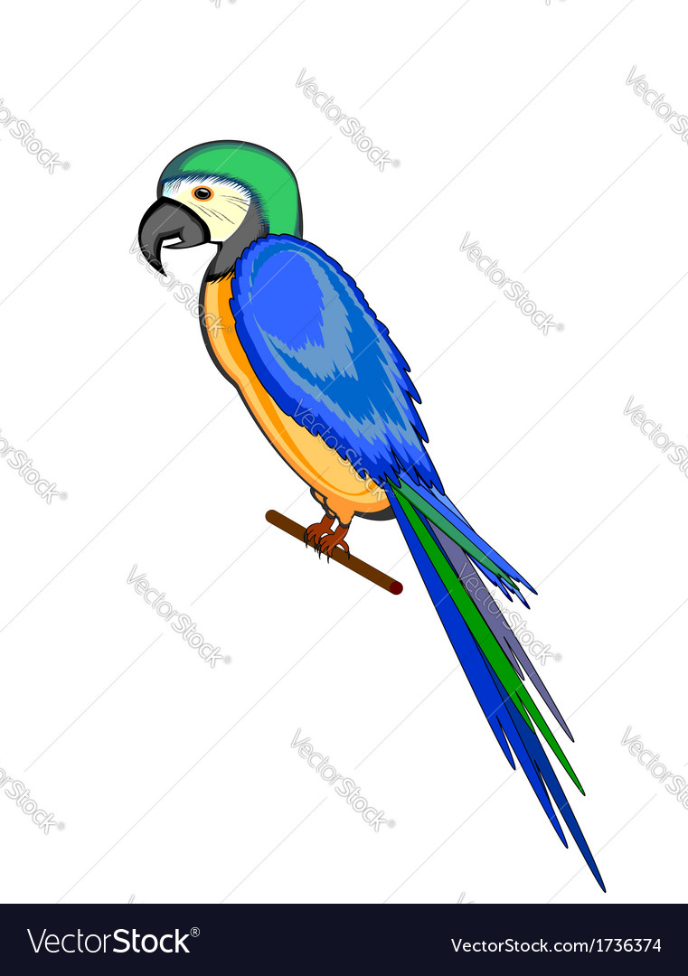 A parrot macaw isolated on a white background vector | Price: 1 Credit (USD $1)