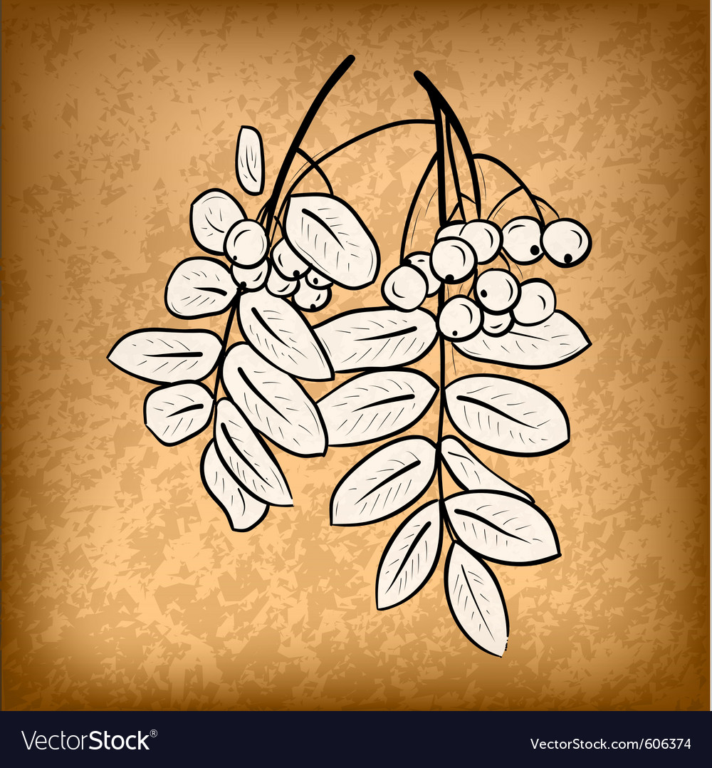 Rowan on the old background vector | Price: 1 Credit (USD $1)