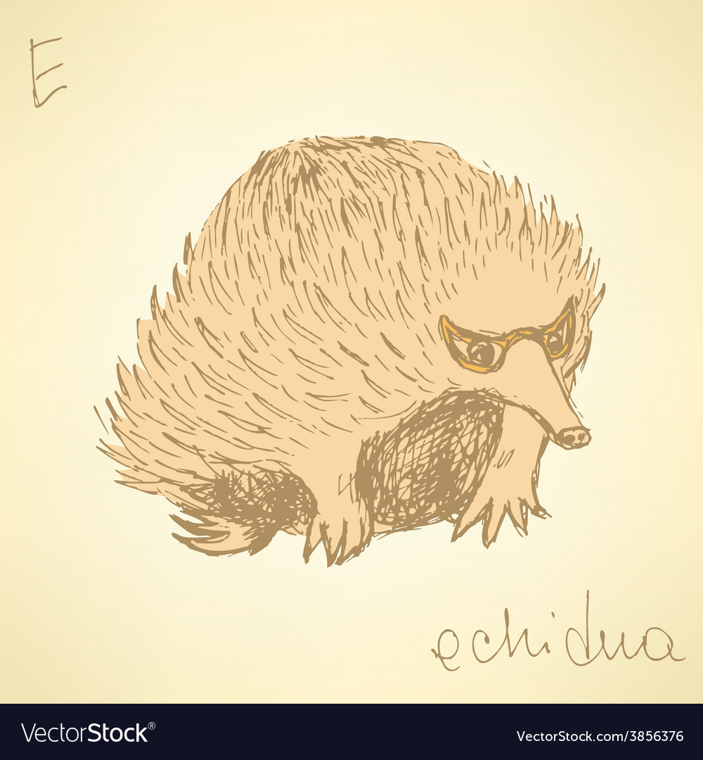 Sketch cute echidna in vintage style vector | Price: 1 Credit (USD $1)