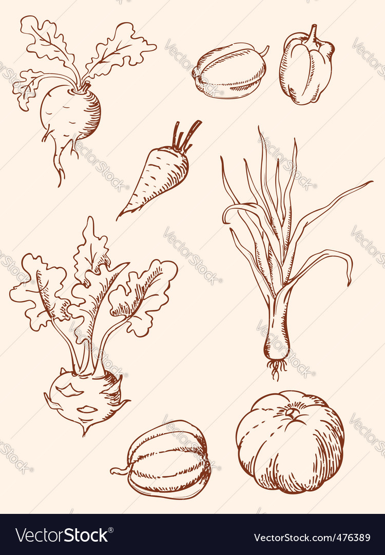 Hand drawn vintage vegetables vector | Price: 1 Credit (USD $1)