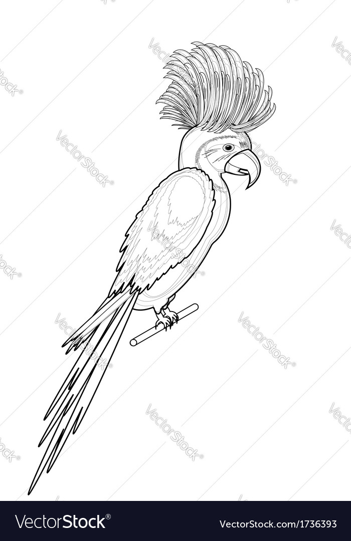 A monochrome sketch of macaw parrot vector | Price: 1 Credit (USD $1)