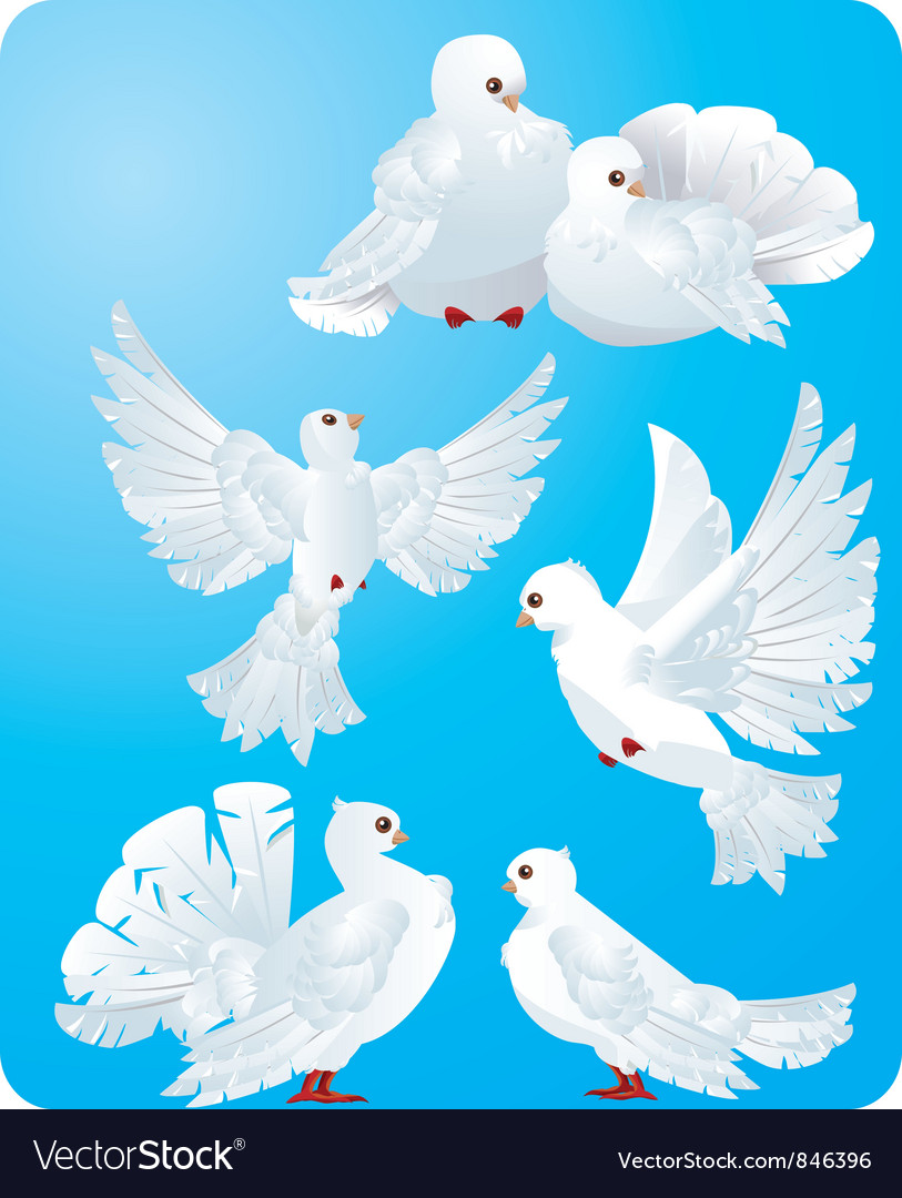 Set of white pigeons vector | Price: 1 Credit (USD $1)