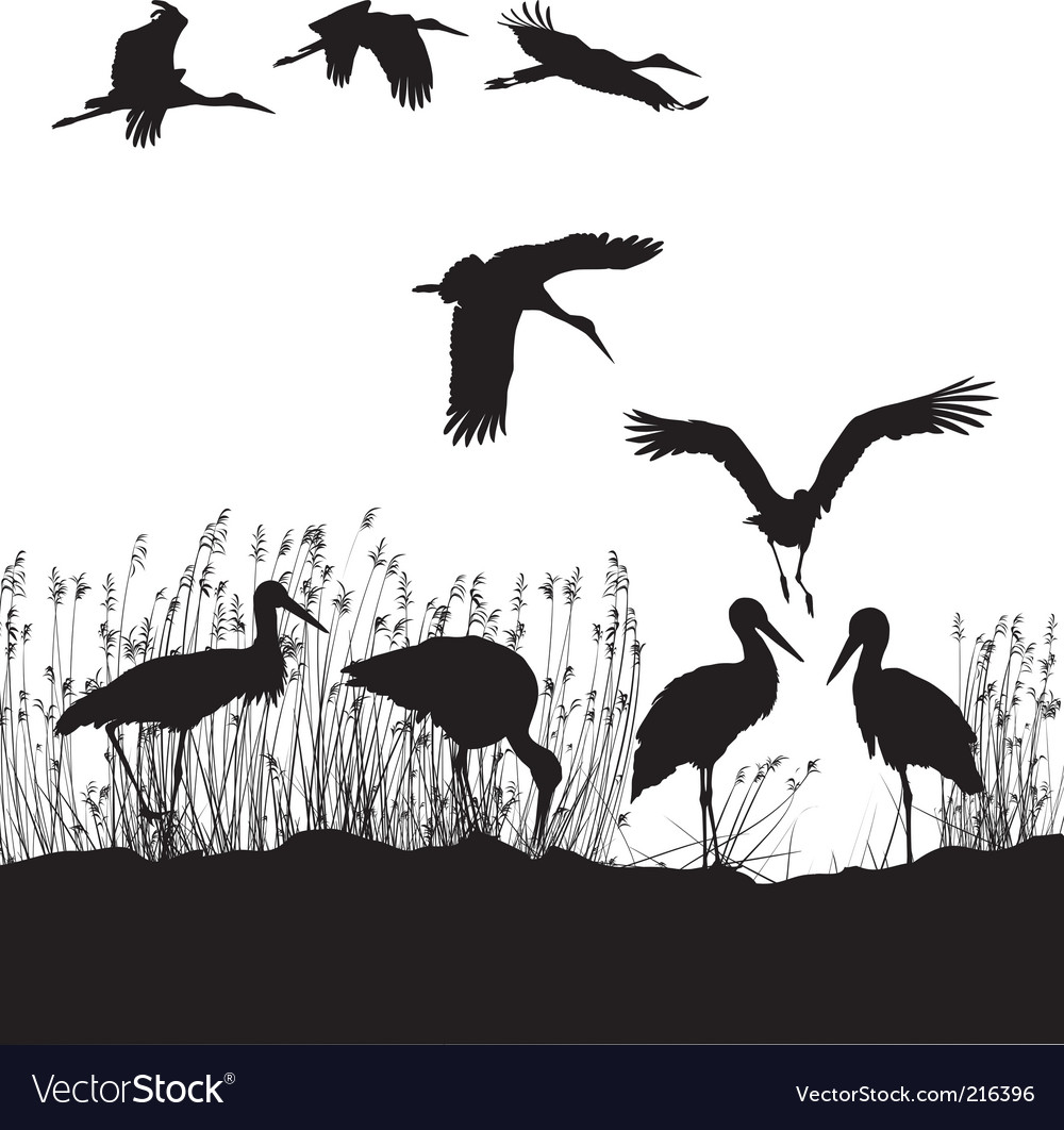 Storks in peat vector | Price: 1 Credit (USD $1)