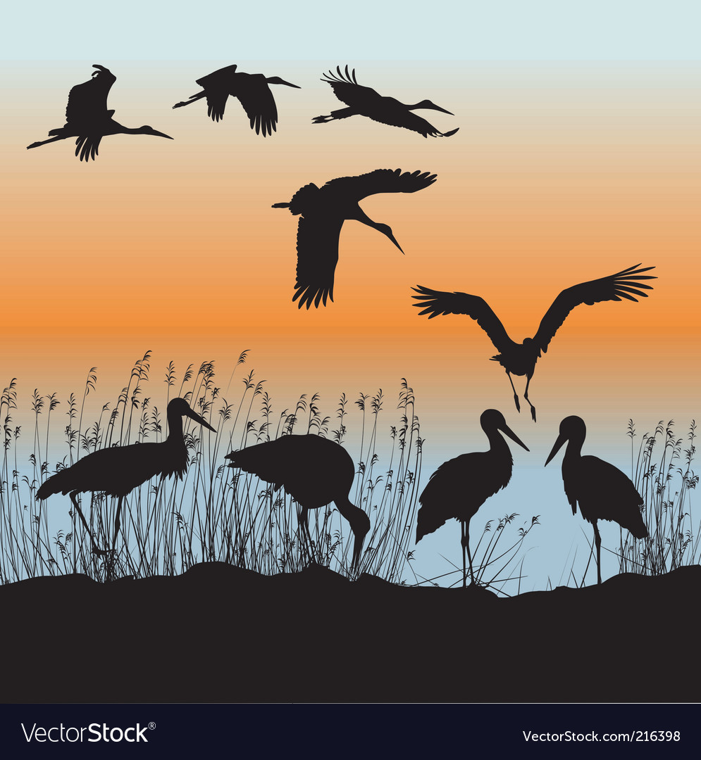 Storks vector | Price: 1 Credit (USD $1)