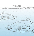 Two great white shark in the water sketch black vector