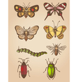 Set of hand drawn vintage butterfly and insects vector