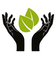 Hands with leaf symbol vector