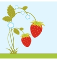 Strawberries with blossom vector