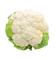 Cauliflower isolated on white background vector