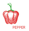 Hand drawn pepper sketch vector