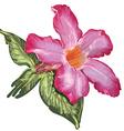 Adenium desert rose flower and leaves sketch on a vector