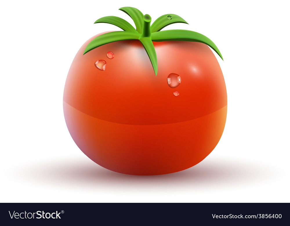 Red tomato isolated on white background vector | Price: 3 Credit (USD $3)