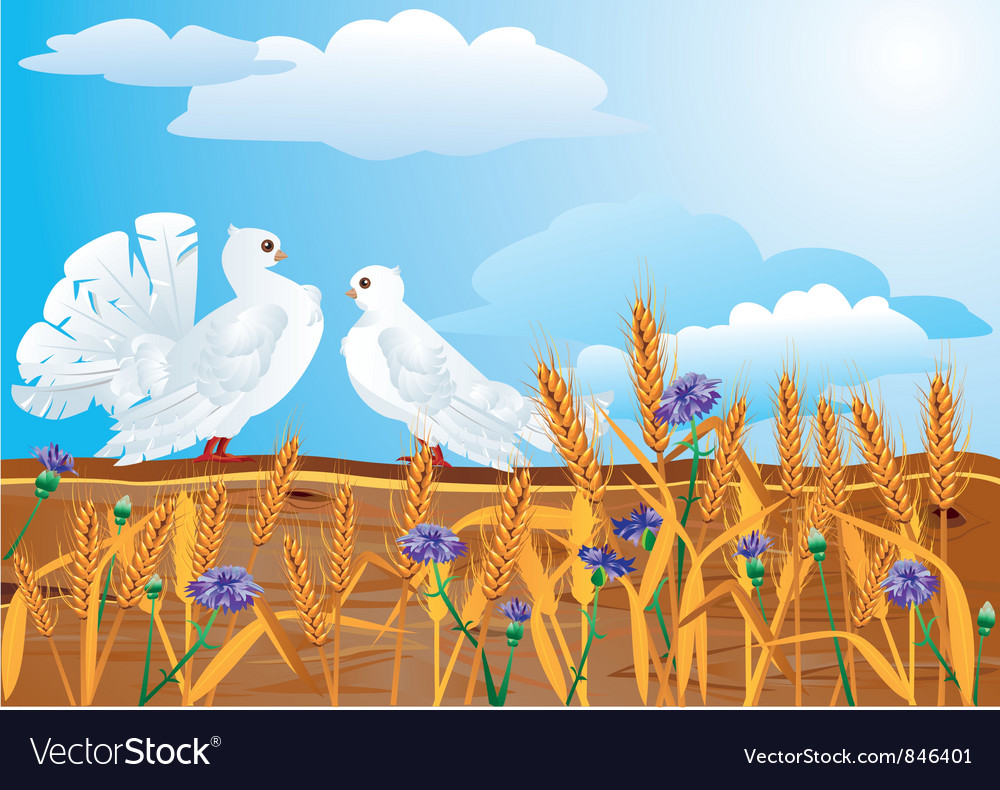 Couple of white pigeons vector | Price: 1 Credit (USD $1)