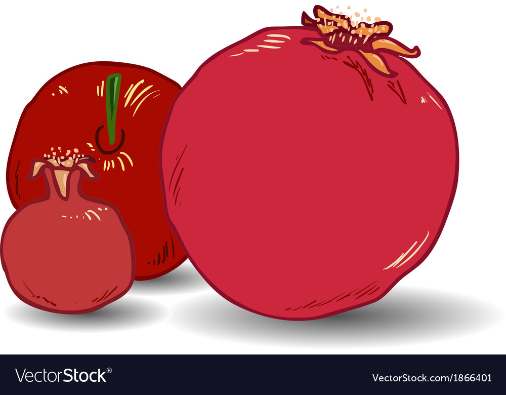 Pomegranates for rosh hashanah 1 vector | Price: 1 Credit (USD $1)