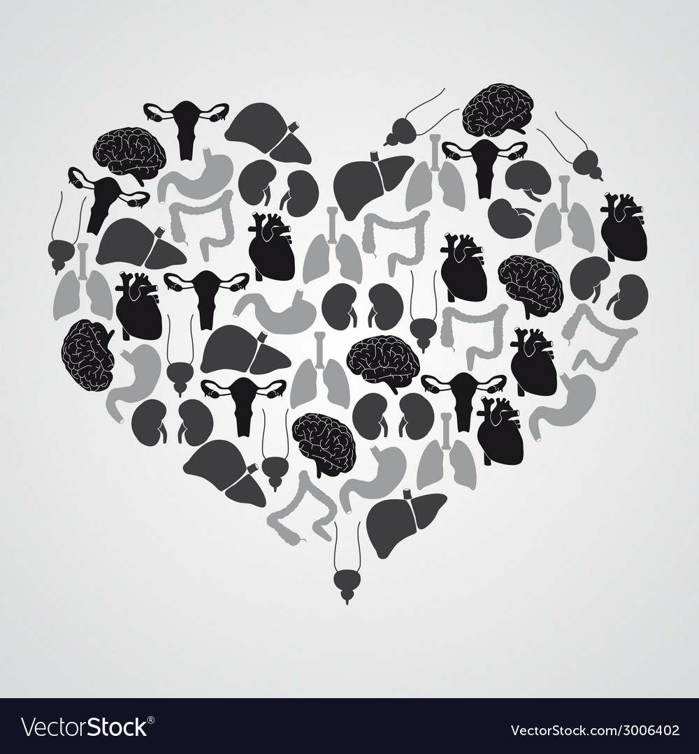 Internal human body organs in heart shape eps10 vector | Price: 1 Credit (USD $1)