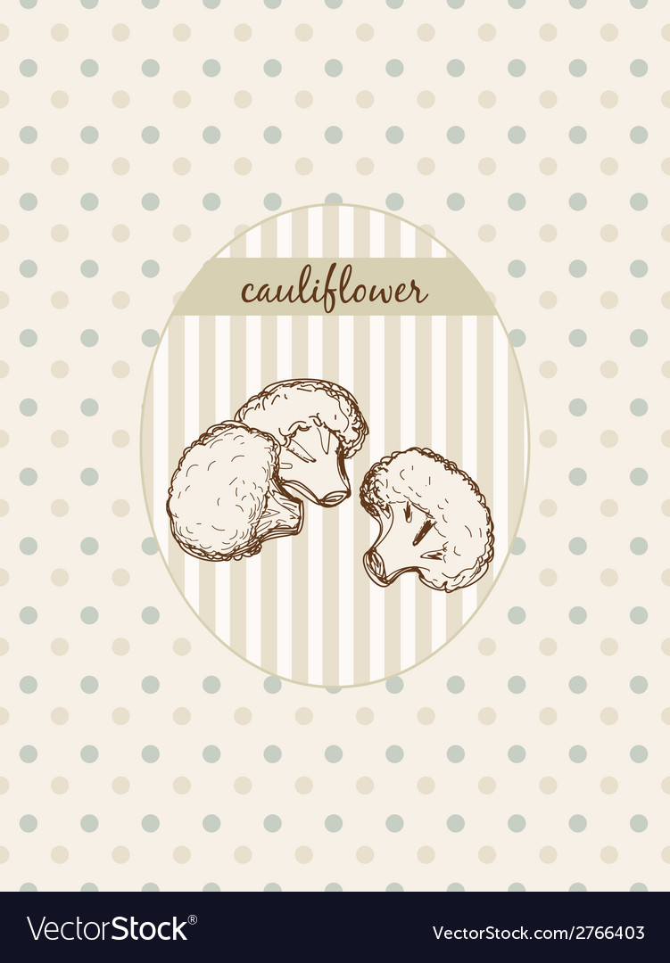 Cauliflower vector | Price: 1 Credit (USD $1)