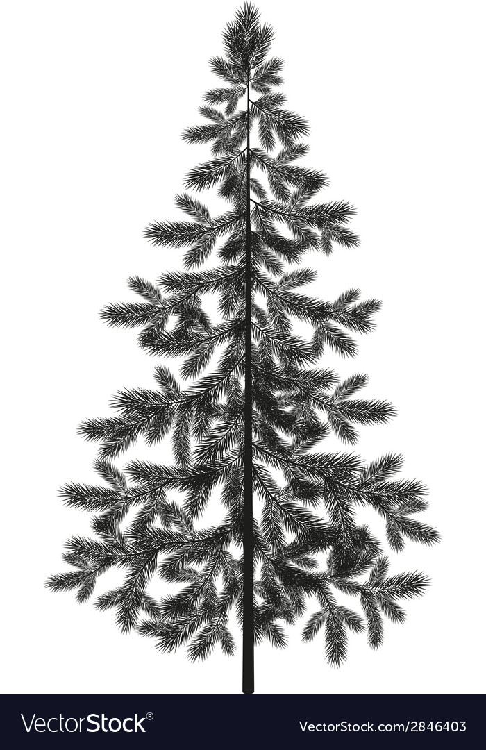 Christmas spruce fir tree silhouette vector | Price: 1 Credit (USD $1)