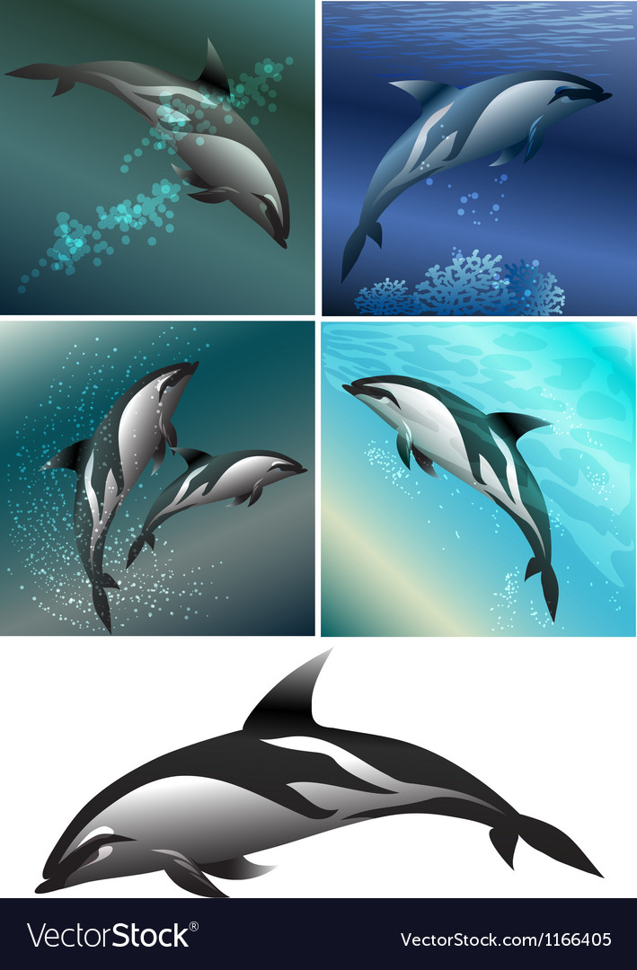 Dolphin set vector | Price: 3 Credit (USD $3)