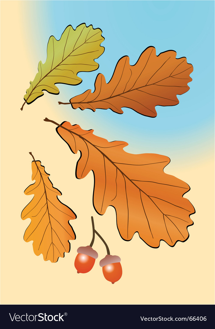 Autumn oak leaves vector | Price: 1 Credit (USD $1)