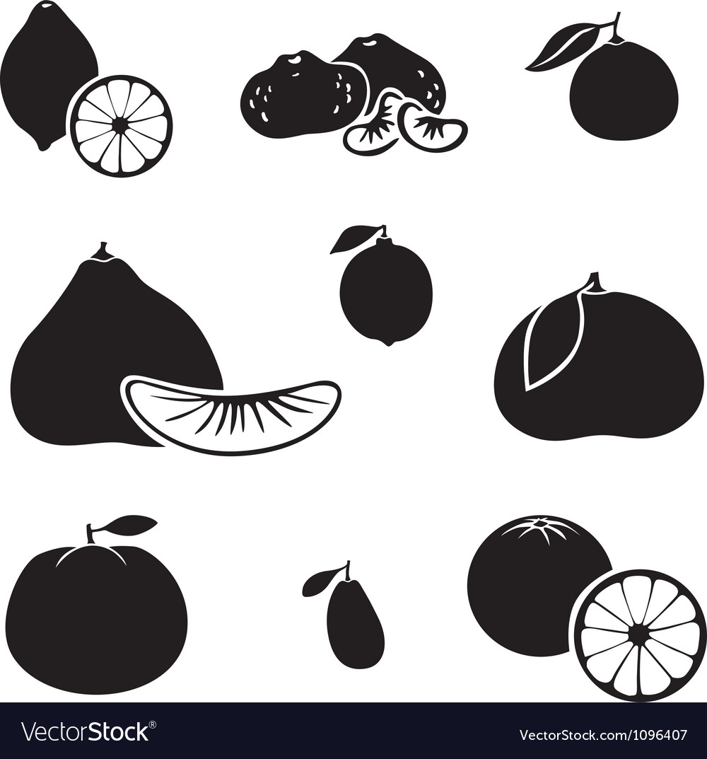Citrus fruit vector | Price: 1 Credit (USD $1)