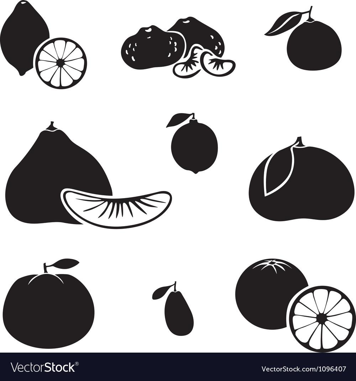 Citrus fruit vector | Price: 1 Credit (USD $1)