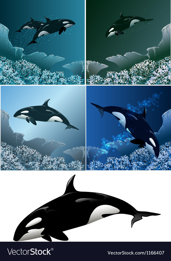Killer whale set vector | Price: 3 Credit (USD $3)
