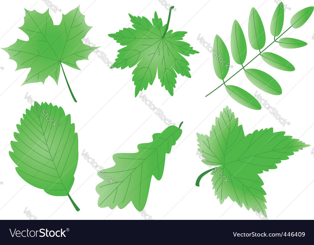 editable green leaves vector | Price: 1 Credit (USD $1)