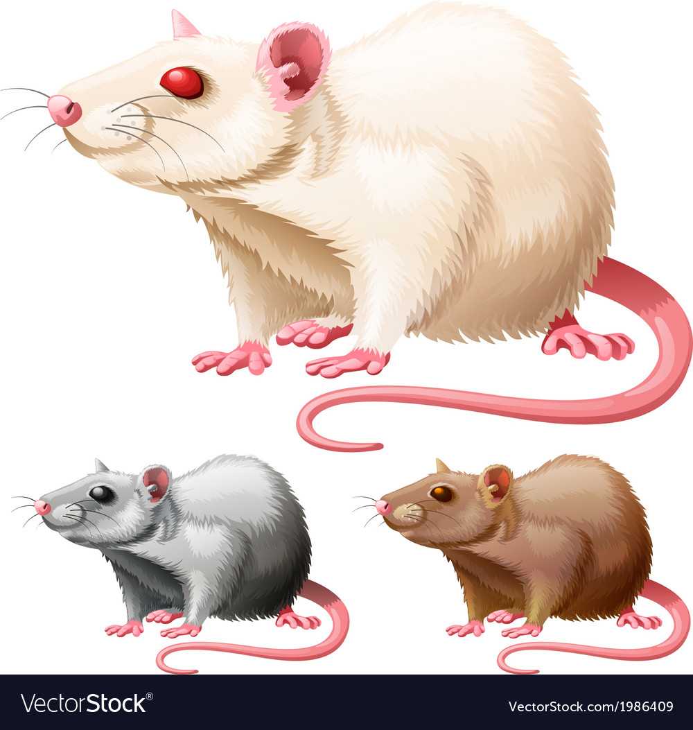 Lab rat vector | Price: 1 Credit (USD $1)