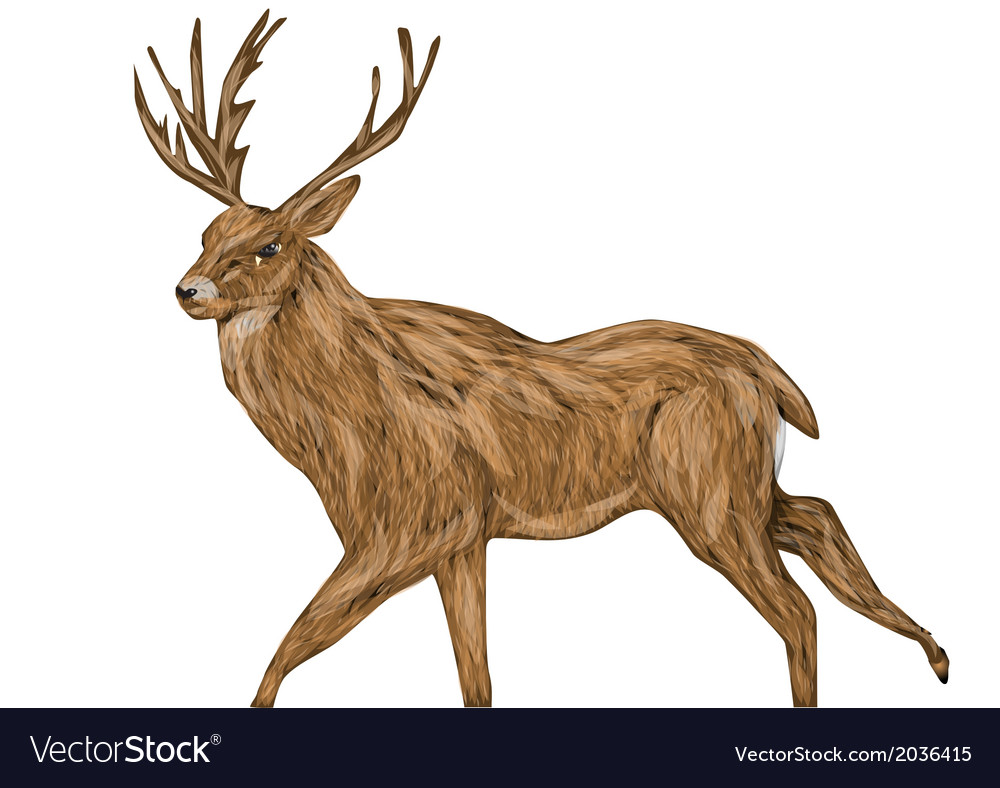 Whitetail buck vector | Price: 1 Credit (USD $1)