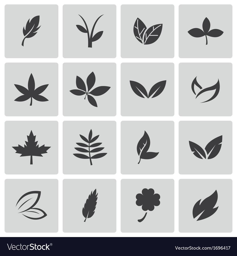 Black leaf icons set vector | Price: 1 Credit (USD $1)