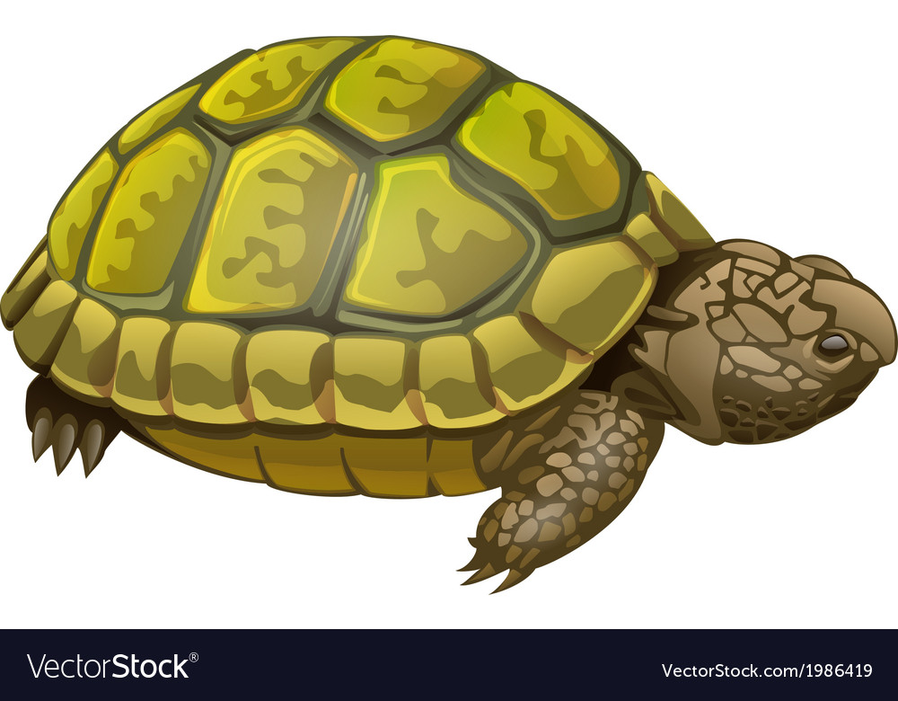 Turtle vector | Price: 1 Credit (USD $1)