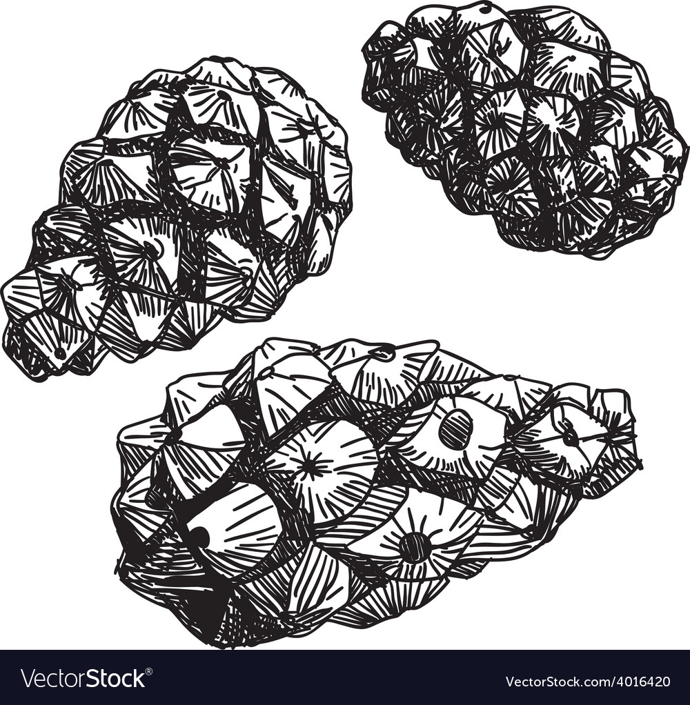 Set of pine cones black contour on a white vector | Price: 1 Credit (USD $1)