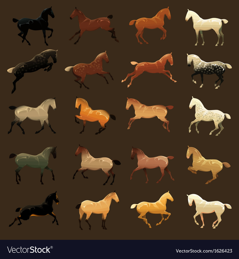 Horse coat colors vector | Price: 1 Credit (USD $1)